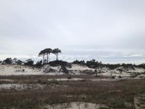 Windswept dunes on St. George's Island SP