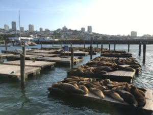 The inhabitants of Pier 39